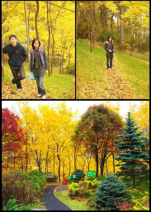 アカシアの森3
