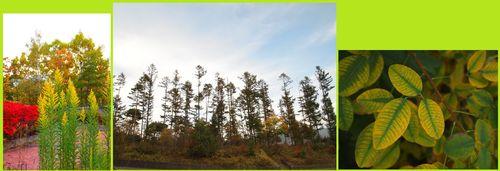 清里の森1