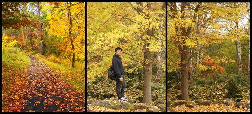 アカシアの森1